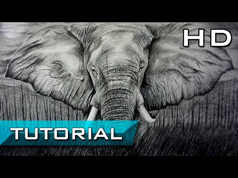 How to Draw an Elephant with Pencil Step by Step for Beginners - Tutorial