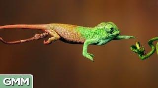 10 Amazing Animal Disguises (w/ video)