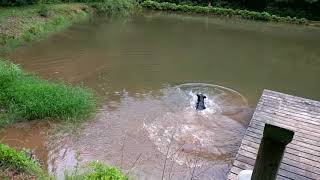 aldy slow motion diving in pond 6 9 18