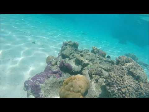 Watch in HD 1080 ! Rarotonga Vlog Snorkeling Cook Islands Trip