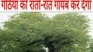 इसको छूने मात्र से खत्म हो जाते हैं गठिया जैसे खतरनाक 15 रोग//Ayurved Samadhan