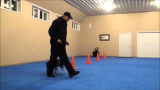 Sam (boston Terrier) Dog Training Boot Camp Video