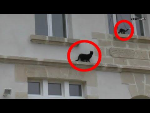 """Akrobatische Hauskatzen wie Vögel """"house"""" cats acrobats imitate birds in """"Flabas"""" (Lorraine, France)"""