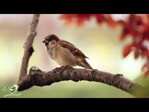 Pachelbel's Canon In D | Relaxing Harp Music | Beautiful Classical Music ★19