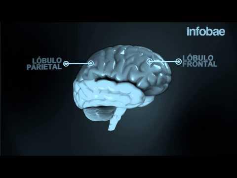 Cerebros en red: mecanismo de atención