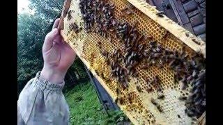 Карника Пешетц, майский мёд.(, 2016-05-16T12:26:33.000Z)