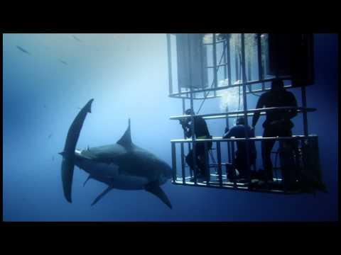 Great White Shark Official Film Trailer