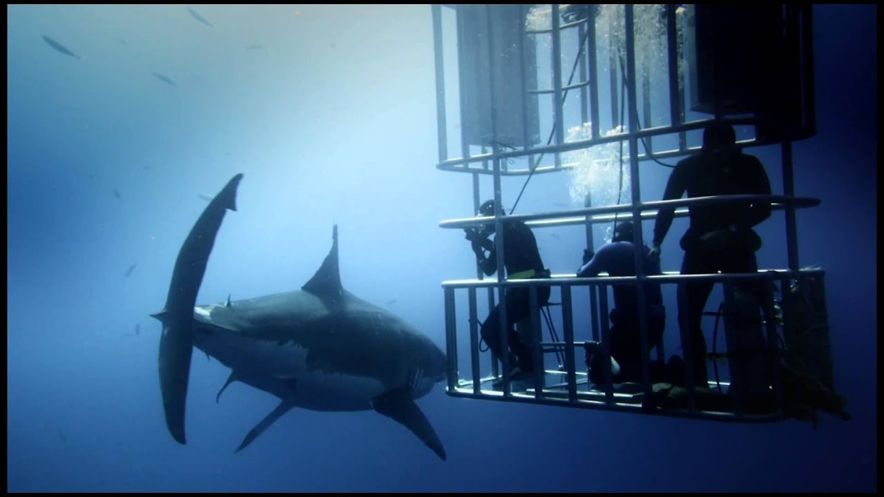 Great White Shark Official Film Trailer - YouTube