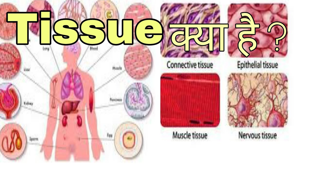 What\'s tissue perfusion? उतक क्या है? For any Examination ...