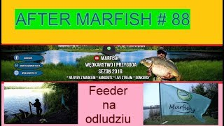After Marfish # 88 Feeder na odludziu. Liga Marfisha. Live chat - Na żywo