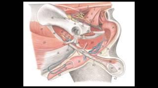 Anatomía del Sistema Reproductor Femenino y Masculino en animales domésticos