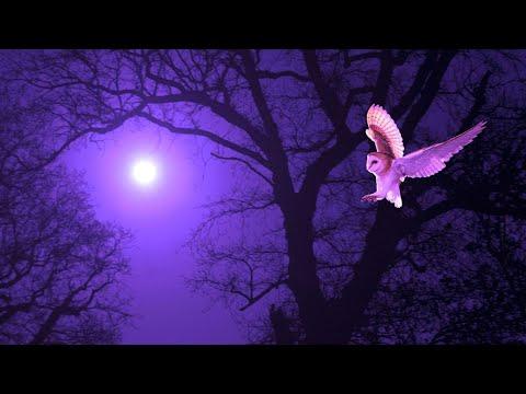 Sleeping Deeply | 528Hz Tranquil Sleep Meditation Music | Delta Waves Healing | Cleansing Energy