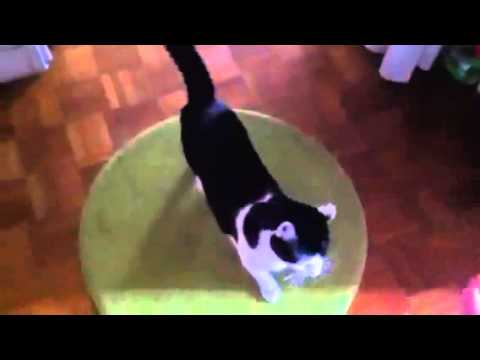 Funny Cat Plays Dead! It's Not Just a Trick for Dogs!