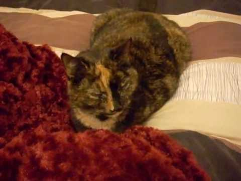 Cutest Tortoiseshell Cat Ever.