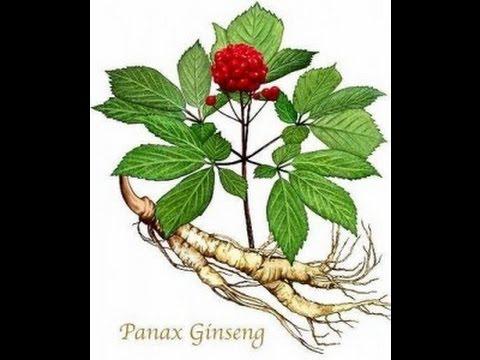 Ginseng Story