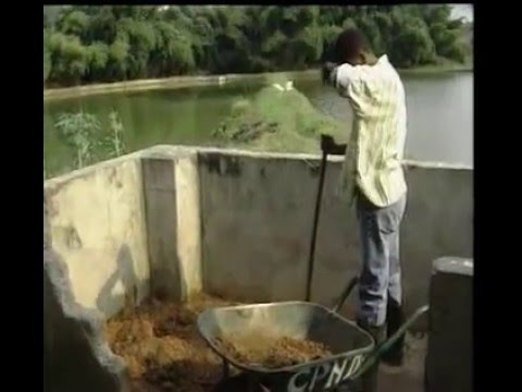 Fish culture in Congo Brazzaville  (Part 1 of 2)
