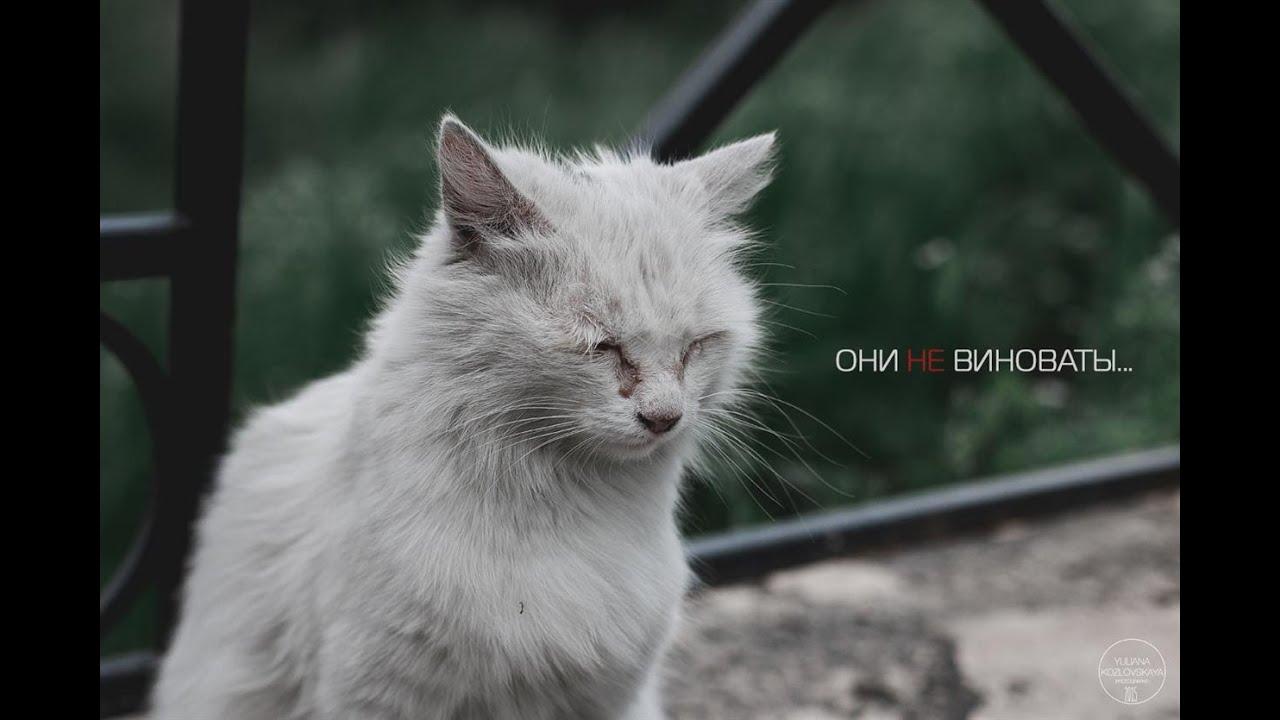 Картинки по запросу социальная реклама о животных