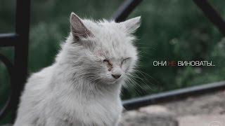 """Социальная реклама про бездомных животных. """"ОНИ НЕ ВИНОВАТЫ"""""""