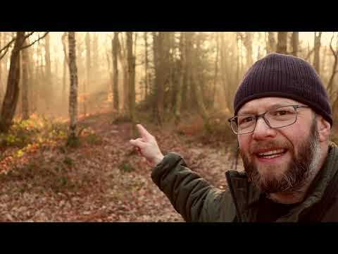 Landscape Photography | Woodland Photography | What Are You Afraid Of? thumbnail