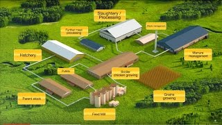 Presentation of the Complex for broiler meat production