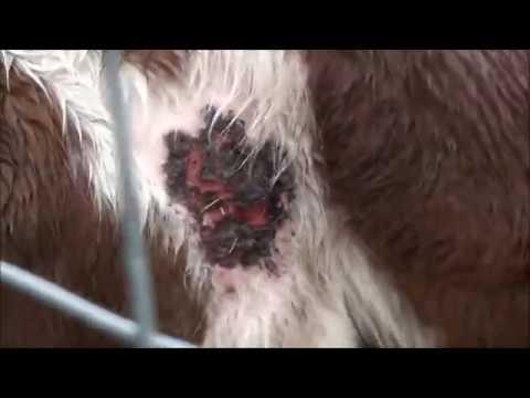 parc animalier souppes sur loing 06 03 2017 youtube. Black Bedroom Furniture Sets. Home Design Ideas