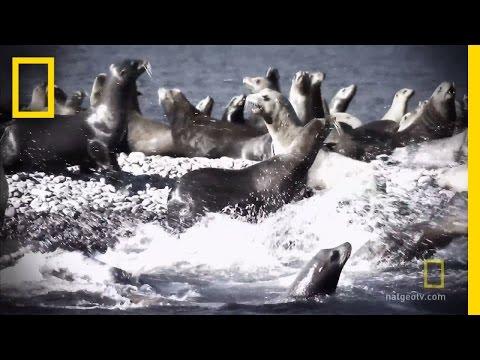 That Sharky Smell  Shark Men