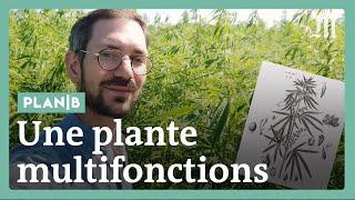 Pourquoi la France se remet massivement au chanvre #PlanB