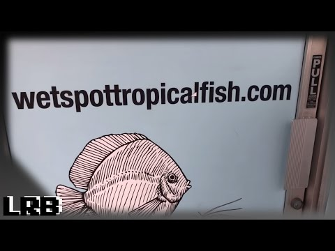 The Wet Spot Tropical Fish Aquarium Store Tour!