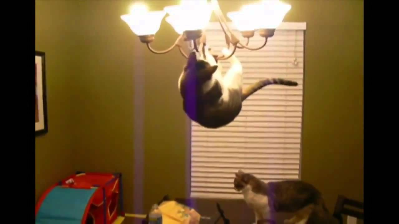 Cat jumps on the chandelier youtube cat jumps on the chandelier arubaitofo Choice Image