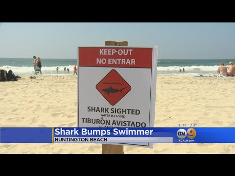 Shark Sighting Forces Closure Of Huntington Beach