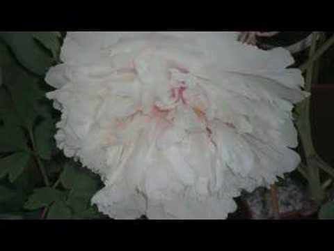 Poem with flowers youtube poem with flowers mightylinksfo