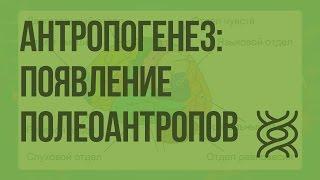 Антропогенез: появление полеоантропов. Видеоурок по биологии 11 класс