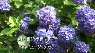 【おすすめ】ドラマ「科捜研の女」 サントラ BGM 科捜研のテーマ ~厚く...