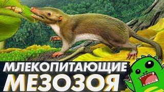 МЛЕКОПИТАЮЩИЕ МЕЗОЗОЯ: что позволило выжить среди динозавров? (часть 2)