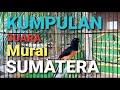 Langsung Nyaut Dan Gacor Mendengar Murai Ini Kumpulan Suara Murai Sumatra  Mp3 - Mp4 Download