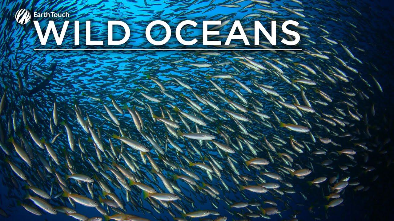 Video: A natural wonder – the sardine run