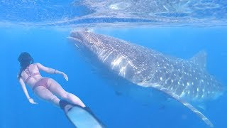 BIGGEST FISH IN THE WORLD - Whale Sharks of Mexico