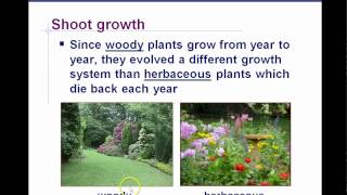 AP Biology Plant Anatomy Chapter 35 part 3
