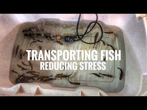 Transporting Fish & Reducing STRESS