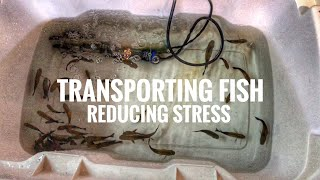 Transporting fish & reducing STRESS