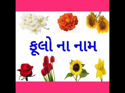 ફૂલો ના નામ/flowers name/ફૂલોના નામ ગુજરાતી માં/ flowers name in gujarati