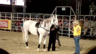 cavalo que dança o djavu e mais uotras musicas