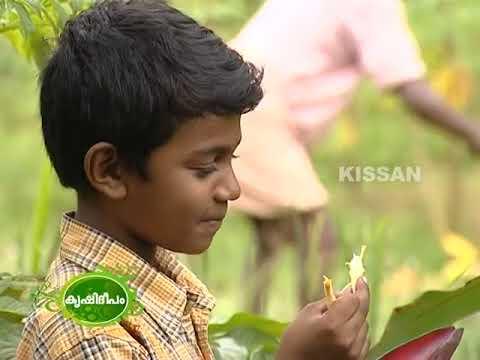 Farmer Businessman NRIKeralaite, motivated by Krishideepam programs