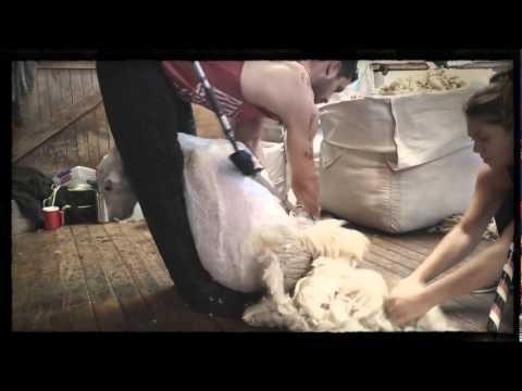 Te Anau Shearing