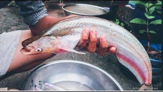 Cắm câu bằng mồi cá sống được bữa cá trèn to ✅