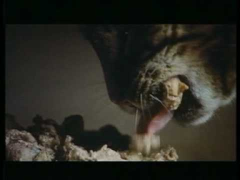 Cancel The Third World Debt cinema ad - Fat Cat