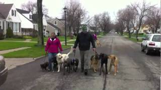 Dog Training - Buffalo, Ny Pack Walk