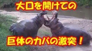 野生動物の世界チャンネル □チャンネルの説明 野生動物の衝撃映像・ 今...