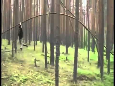 V lese sa treba chovať slušne