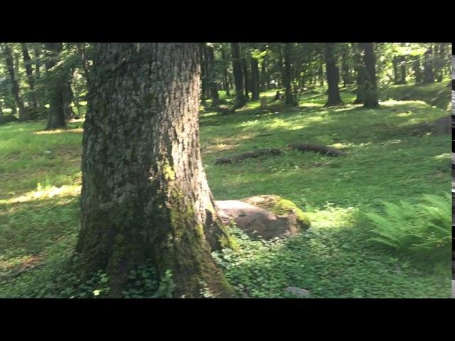 Filosofía en el bosque 32. El rostro del otro.
